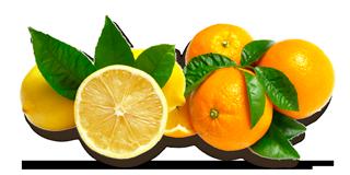 Mandarina Bavaria impressions