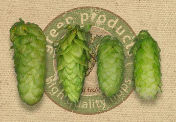 Bitter hops