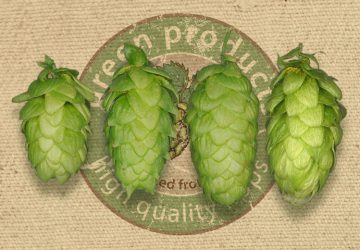 Fine aroma hops