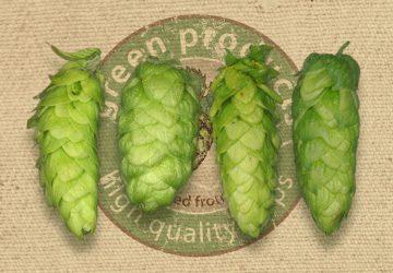 Special flavour hops