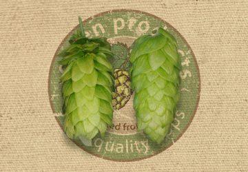 Very fine aroma hops